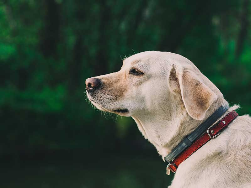Who gets to keep the dog? | Family Law Gold Coast | Advance Family Law