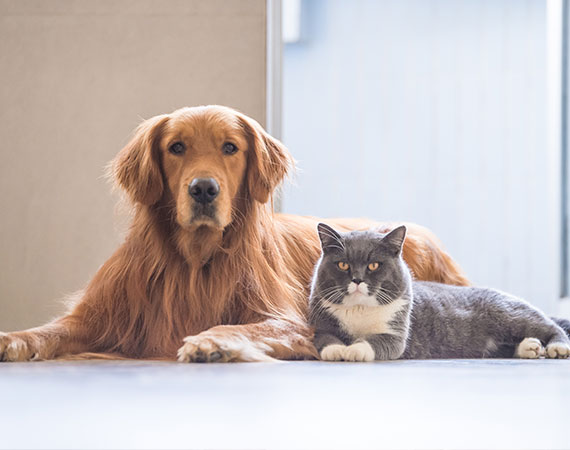 Pet Agreements Gold Coast